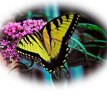 Tiger on Butterfly Bush by suzannem73
