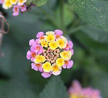 The littlest Flower by Okeesworld