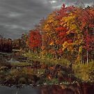 Connecticut in the Fall by milton ginos