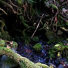 mossy roots by ShannonConyers