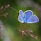 A Little Blue by Arla M. Ruggles