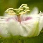 Flower Dance by Amran Noordin