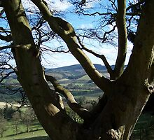 View from a Glentress tree  by mysticcatnip