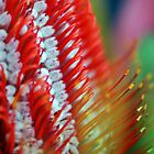 Banksia Abstract by Renee Hubbard Fine Art Photography
