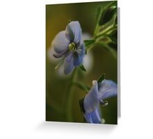 Twins (from wild flowers collection) Greeting Card