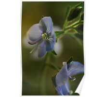 Twins (from wild flowers collection) Poster