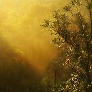 """Banksia in the Mist"" by debsphotos"