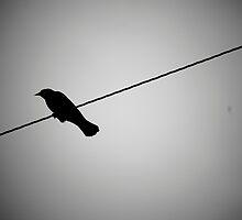 Bird on a Wire by Erin  Sadler
