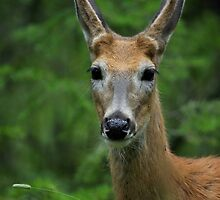 Young Buck by Topps