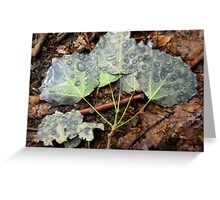 Leaves with raindrops Greeting Card
