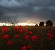 Sunset with Poppies by Chris Tait