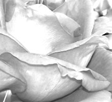 CLOSE ROSE B&W by dragonindenver