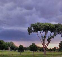 A Storms A Comin by Carla Jensen