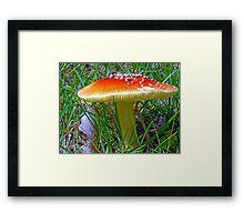 *Amanita muscaria* Framed Print