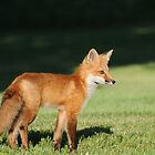 Foxy Lady  by Lynda   McDonald