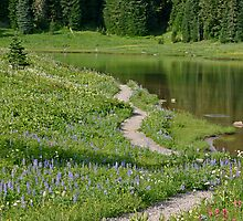 A pathway to paradise (Tipsoo Lake) by Barb White