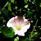Pink Flower by Mirafaye