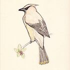 Cedar Waxwing by Carrie Potter
