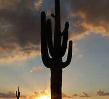 Arizona cliche by Denise Couturier