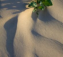 Sand Dune Detail, Bruny Island, Tasmania by Andy Townsend
