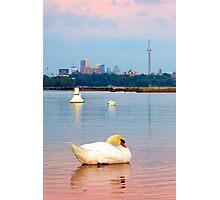 Toronto Swan Song Photographic Print