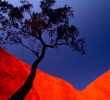 Spiritual Canyon, Uluru, Northern Territory by Andy Townsend