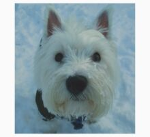 A Westie posing in the snow. by albutross