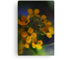Yellow Wreath (from wild flowers collection) Canvas Print