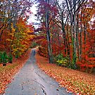*MY FAVORITE COUNTRY ROAD* by Van Coleman