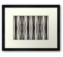Eucalypt forest • Warrawong Sanctuary, South Australia Framed Print