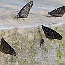 Concrete Butterflies by Dave Lloyd