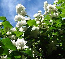 Sky Blossoms 2 by girljo818