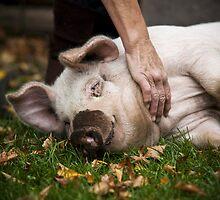 Playful Pig by MagnusAgren