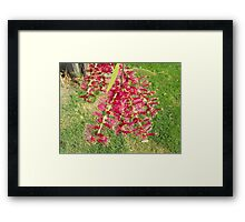 Red & Green  Framed Print