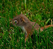 Baby Squirrel by Do0lphi1n