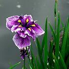 River Flower by LjMaxx