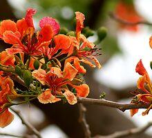Orange Flame by Kent Tisher