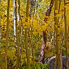 Golden Forest by photosbyflood