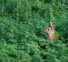 Rabbit by DanielTMiller