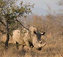 White Rhinoceros by Erik Schlogl