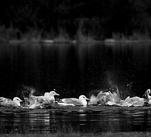 Bathing - fine art photograph by yuliart