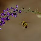 Bumblebee Flight by Al Williscroft