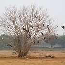 Big kite birds landing and taking off from a leafless tree by ashishagarwal74