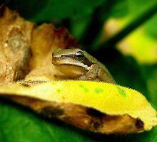 Close Up Frog by Vanessa Barklay
