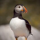 Puffin Portrait by David Lewins LRPS