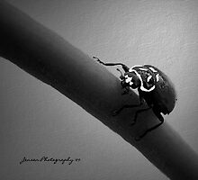 In The Spot Light 2   ( Ladybug Series ) by Carla Jensen
