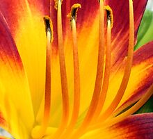 Day Lily Exposé by Donna R. Carter