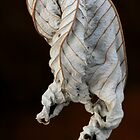 dried leaf by Kent Tisher