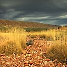 Spinifex.  Bathed in golden light before the storm. by Keiran Lusk