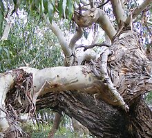 bulls head in tree trunk by gaylene